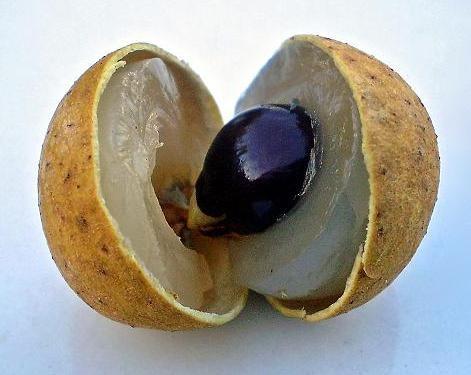 龍眼肉(リュウガンニク)